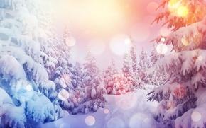 Обои snow, снег, зима, снежинки, елка, nature, лес, winter