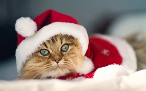 Картинка костюм, Daisy, © Benjamin Torode, Christmas Cat