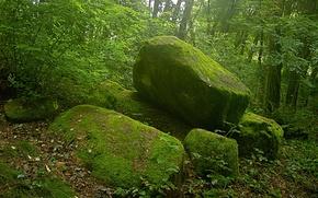 Картинка зеленый, мох, Камни