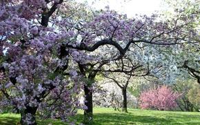 Обои цвет, розовые, деревья, весна, сад