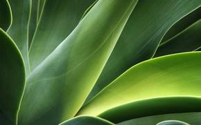 Картинка зелень, листья, стебли, растение, изгибы