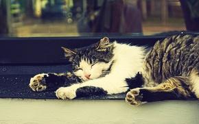 Картинка кошка, сон, окно