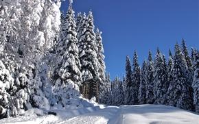Картинка зима, дорога, снег, деревья, пейзаж