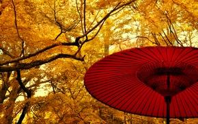 Картинка Japan, жёлтые, yellow, сад, деревья, leaves, зонт, fall, Япония, листья, autumn, осень, trees, nature