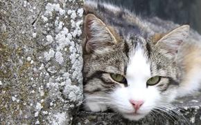 Картинка кот, камни, отдых, улица