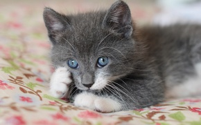 Картинка котенок, глазки, лапки