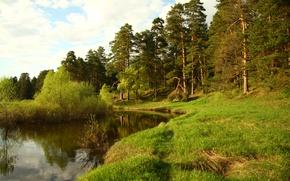 Обои лес, пейзаж, природа, река, отдых, обои, прогулка, Кава