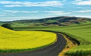 Картинка пшеница, поля, США, посевы, рапс, проселочная дорога, Palouse, юго-восточный Вашингтон