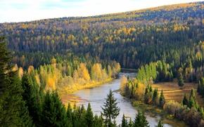 Картинка лес, деревья, река, Россия, Пермский край, Койва