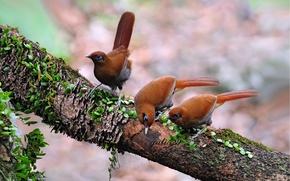 Картинка птицы, фон, дерево, ветка, три