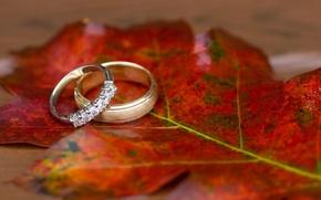 Обои макро, лист, кольца, обои для рабочего стола