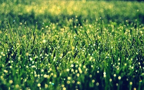 Картинка зелень, трава, солнце, макро, фон, widescreen, обои, растительность, wallpaper, широкоформатные, background, боке, полноэкранные, HD wallpapers, …