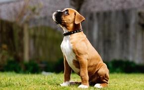 Картинка трава, глаз, собака, щенок, сидит, смотрит