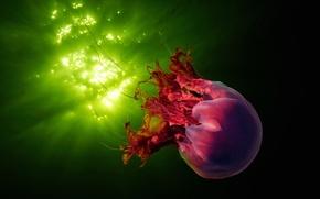 Картинка море, вода, блики, медуза, подводный мир, обои от lolita777