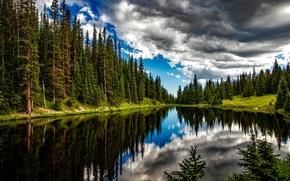 Обои лес, деревья, облака, лето, отражение, вода, озеро