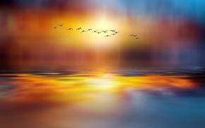 Картинка птицы, озеро, стиль, краски, мир, стая, сказочный, Josep Sumalla