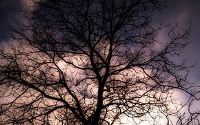 Картинка Clouds, Sky, Winter, Tree, Sunset, Shadow, Branches, Dusk