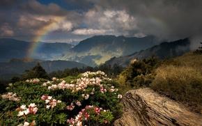 Картинка цветы, горы, радуга