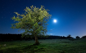 Картинка Луна, свет, дерево, ночь, поле, небо, трава, звезды