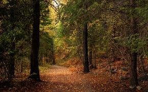 Картинка осень, лес, листья, деревья, парк, путь, камни, солнечный свет