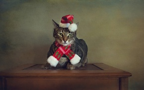 Картинка кошка, кот, стиль, ретро, стол, праздник, портрет, обработка, Рождество, Новый год, Санта Клаус, шарфик, шапочка, ...