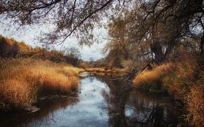 Картинка Осень, Болото, Fall, Autumn, Пасмурно, Swamp
