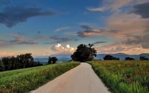 Картинка дорога, деревья, холмы, поля, маки, вечер
