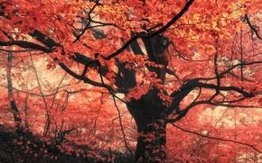 Картинка лес, листья, деревья, туман, Осень, forest, листопад, trees, nature, autumn, leaves, fog, fall