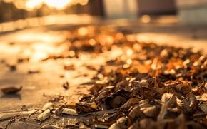 Картинка дорога, осень, листья, макро, сухие, тротуар, боке