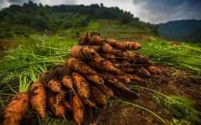 Картинка фон, еда, морковь