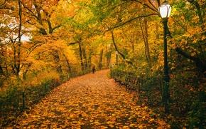 Картинка осень, листья, деревья, путь, люди, Нью-Йорк, скамейки, Центральный парк, Соединенные Штаты, фонарные столбы