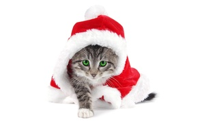 Картинка котенок, белый фон, ноый год