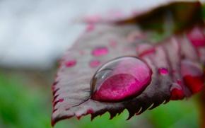 Картинка вода, лист, цвет, капля