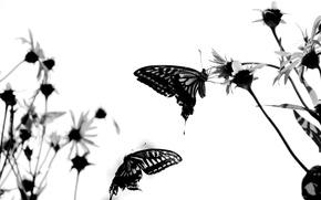 Картинка белый, бабочки, настрой