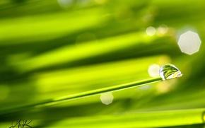 Картинка трава, макро, Обои, обои на рабочий стол, капля росы, отражение в капле росы, макрофотография