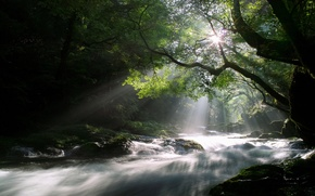 Обои лес, солнце, лучи, свет, деревья, природа, река, поток, утро