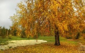 Картинка осень, листья, деревья, природа, фото