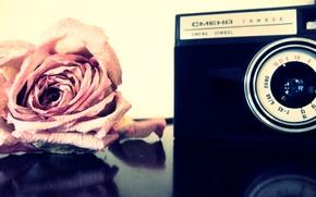Обои Цветы, фотоаппарат, роза