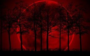Обои мрак, красный, луна, Деревья, фон, черный, мрачность