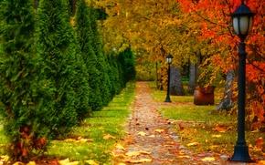 Картинка дорога, осень, листья, деревья, пейзаж, природа, фонарь