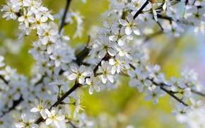 Картинка цветы, ветка, весна