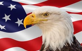 Картинка птица, флаг, Memorial Day