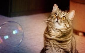 Картинка кот, играет, мыльный пузырь