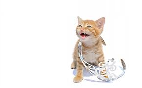 Картинка котёнок, диадема, принцесса, кошечка