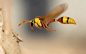 Картинка макро, полет, Пчела