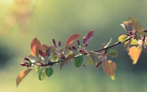 Картинка цветы, весна, бутон, яблоня