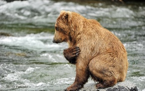 Картинка вода, река, камни, животное, хищник, медведь, молитва, Mariia Fomenko