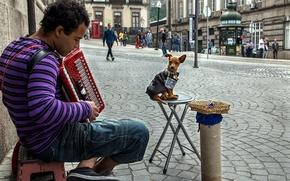 Картинка музыка, улица, человек, собака