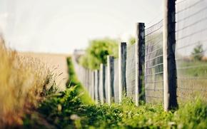 Картинка зелень, трава, макро, цветы, фон, widescreen, обои, забор, размытие, ограда, колоски, ограждение, wallpaper, колосья, широкоформатные, …