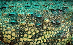 Обои текстура, кожа, крокодил, окрас, рептилия